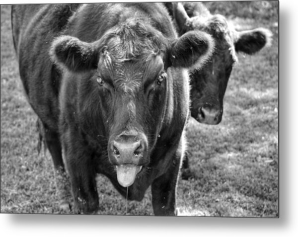 Mad Cow  Metal Print