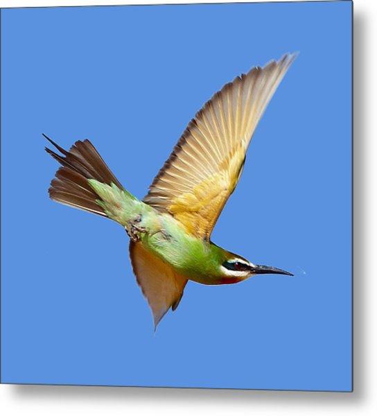 Madagascar Bee-eater T-shirt Metal Print