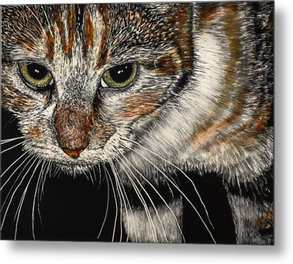 Maggie The Cat Metal Print by Robert Goudreau