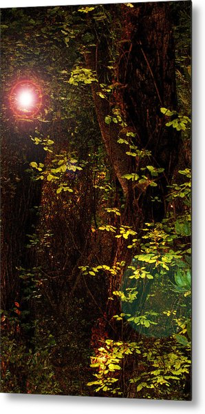 Magical Dark Woods Metal Print by Jean Booth