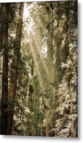 Magical Forest 2 Metal Print