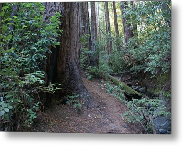 Magical Path Through The Redwoods On Mount Tamalpais Metal Print