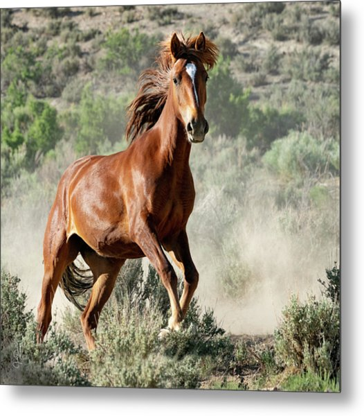 Magnificent Mustang Wildness Metal Print
