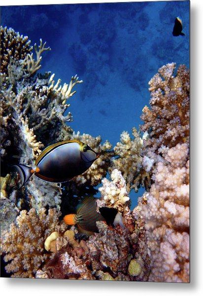 Magnificent Red Sea World Metal Print