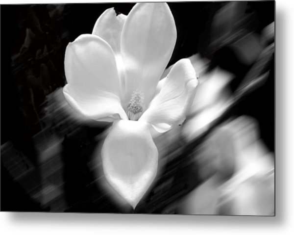 Magnolia Black And White Abstract Metal Print