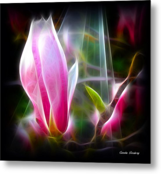 Magnolia  Metal Print by Carola Ann-Margret Forsberg