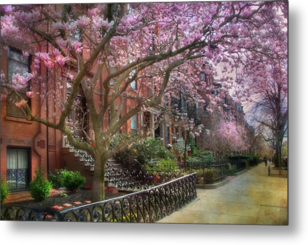 Magnolia Trees In Spring - Back Bay Boston Metal Print