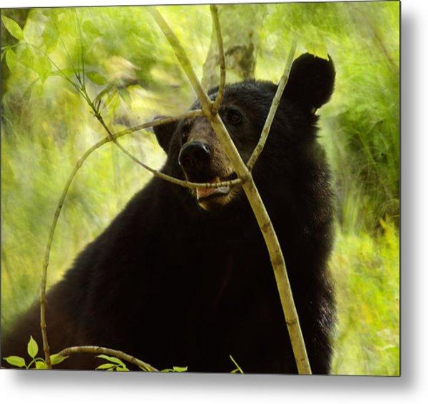 Majestic Black Bear Metal Print