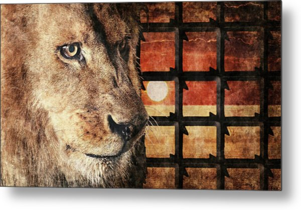 Majestic Lion In Captivity Metal Print