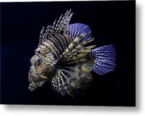 Majestic Lionfish Metal Print