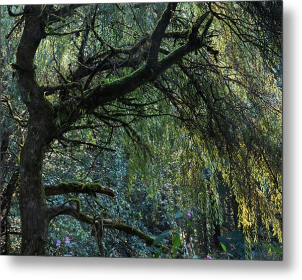 Majestic Weeping Willow Metal Print