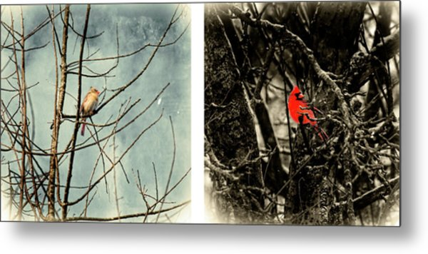 Male And Female Cardinal Metal Print