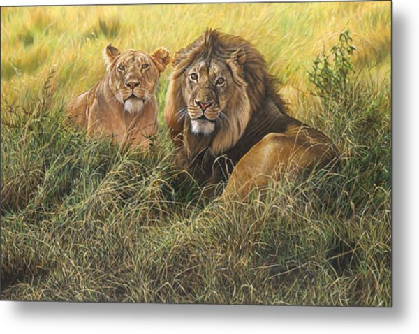 Male And Female Lion Metal Print