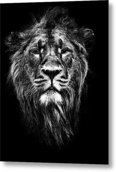 Male Asiatic Lion Metal Print