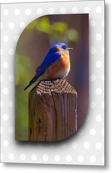 Metal Print featuring the photograph Male Bluebird by Robert L Jackson