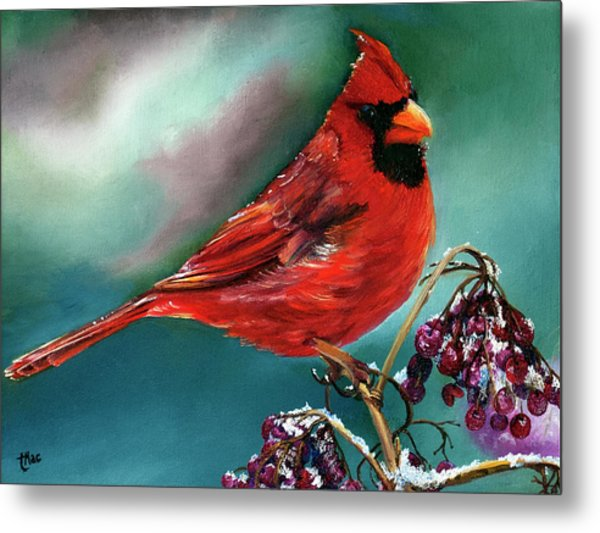 Male Cardinal And Snowy Cherries Metal Print