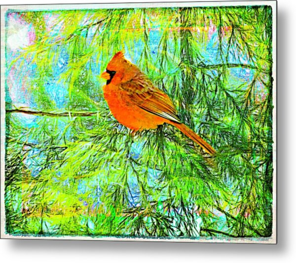 Male Cardinal In Juniper Tree Metal Print