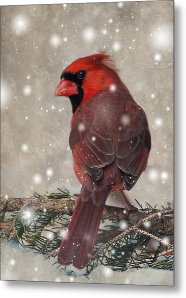 Metal Print featuring the photograph Male Cardinal In Snow #1 by Patti Deters
