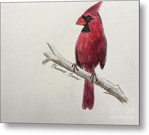 Male Cardinal In Winter Metal Print