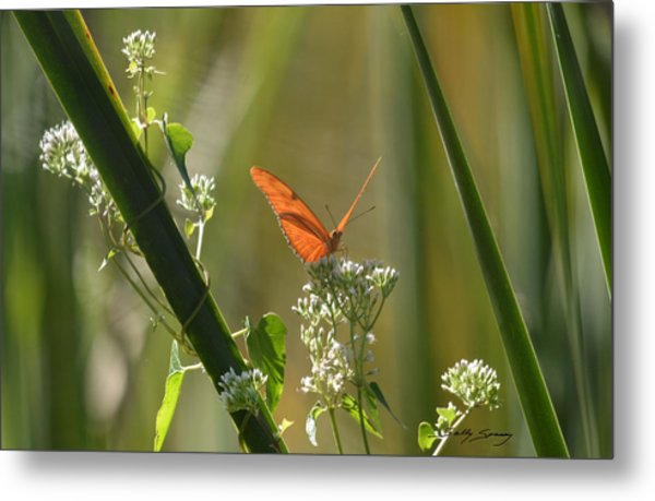 Male Julia Heliconia Butterfly Metal Print