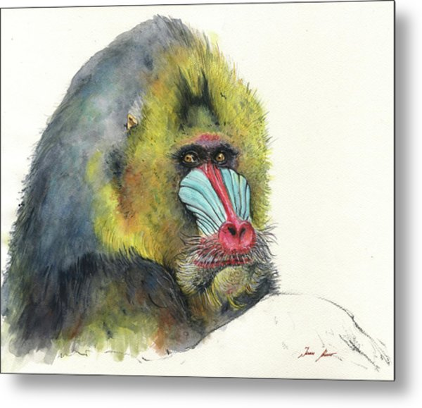 Male Mandrill Metal Print