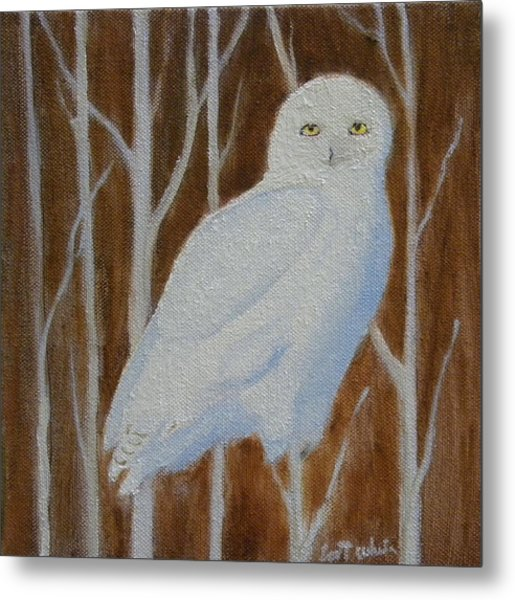 Male Snowy Owl Portrait Metal Print