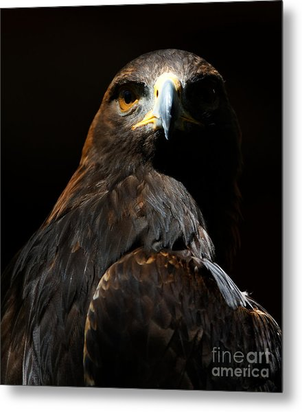 Maleficent Golden Eagle Metal Print