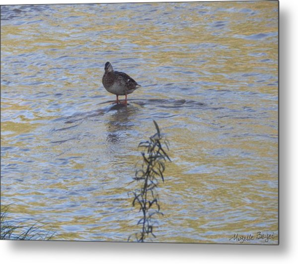 Mallard And The Branch Metal Print