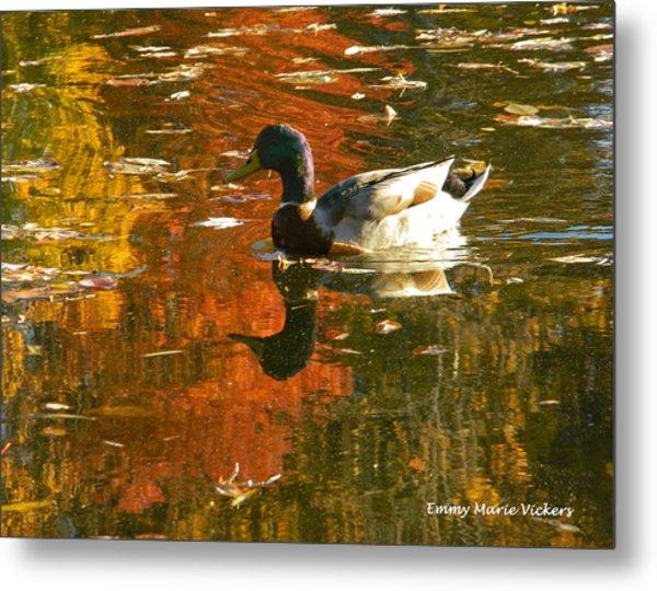 Mallard Duck In The Fall Metal Print