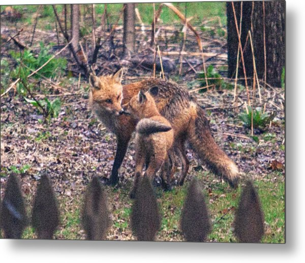 Mama And Kit Apr 2015 Metal Print
