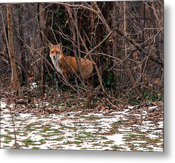 Mama Fox Jan 2015 Metal Print
