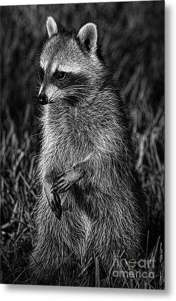Mama Raccoon Metal Print