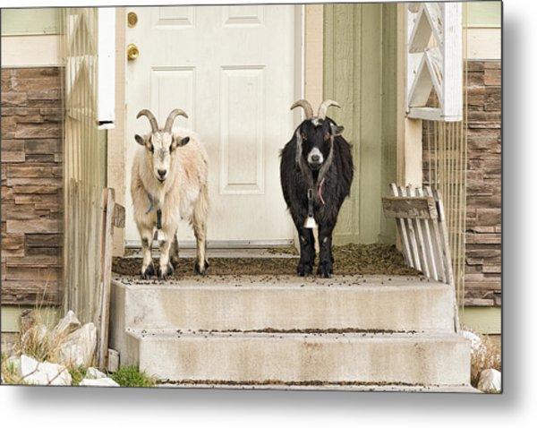 The Goat Guard Metal Print