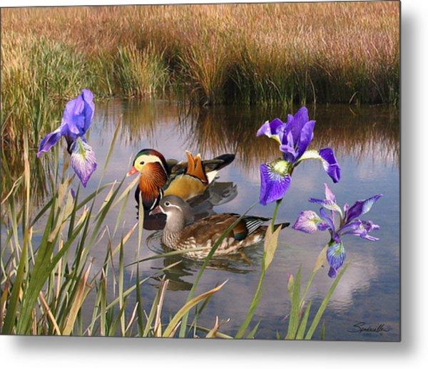 Mandarin Ducks And Wild Iris Metal Print