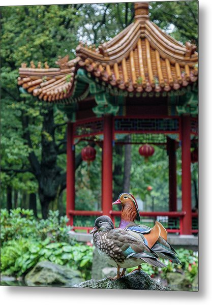 Mandarin Ducks At Pavilion Metal Print