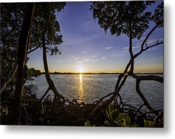 Mangrove Frame Metal Print