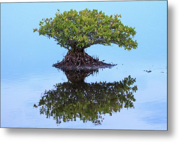 Mangrove Reflection Metal Print