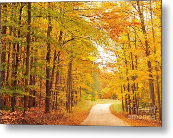 Manisee National Forest In Autumn Metal Print