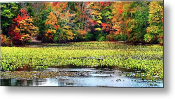 Many Colors Of Autumn Metal Print