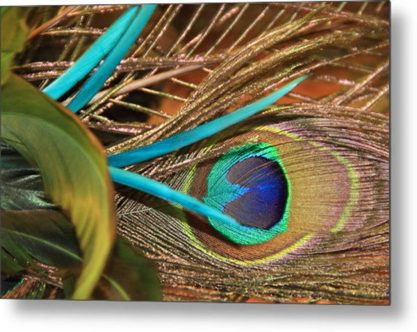 Many Feathers Metal Print
