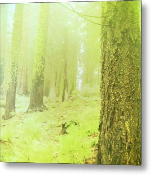 Many Feet To Ascend Metal Print