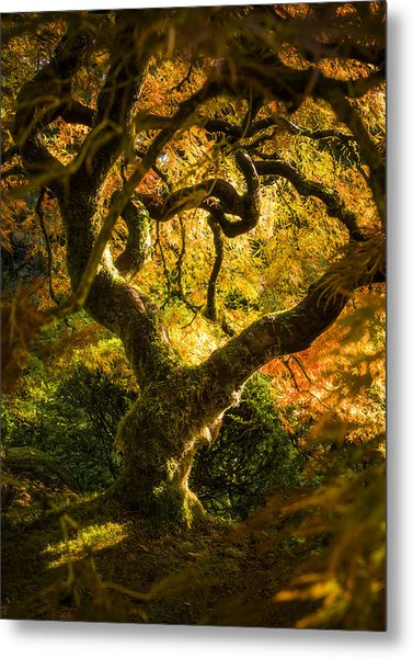 Maple Fairytale Metal Print