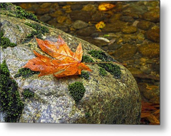 Maple Leaf On A Rock Metal Print