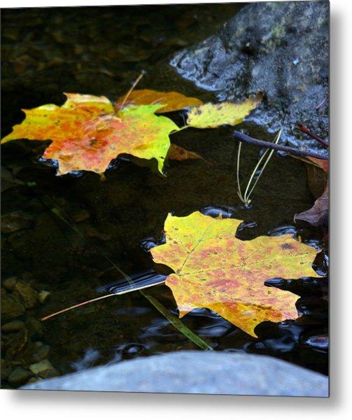 Maple Leaf Metal Print by Sean Shaw