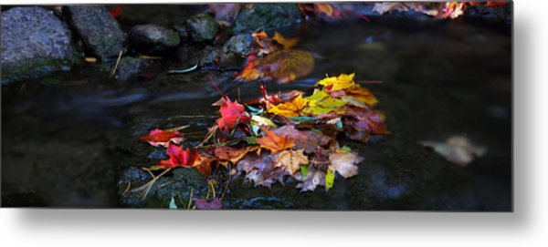 Maple Leaves-0001 Metal Print by Sean Shaw