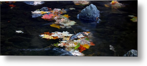 Maple Leaves-0005 Metal Print by Sean Shaw