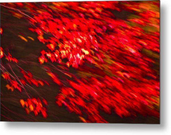 Maple Red Abstract Metal Print