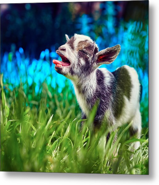 Baby Goat Kid Singing Metal Print
