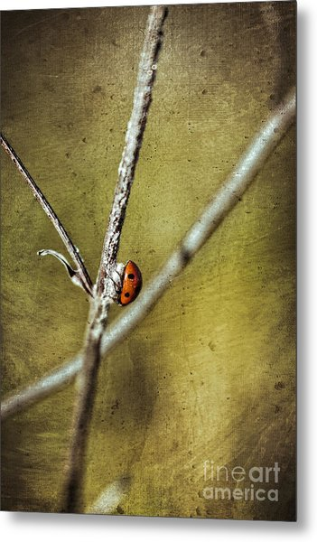 Marienkaefer - Ladybird Metal Print