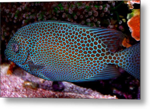 Marine Life Series Metal Print